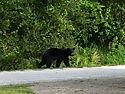 da_bear_043.JPG