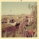 possum-head-camp-florida-everglades--1_5628125387_o.jpg