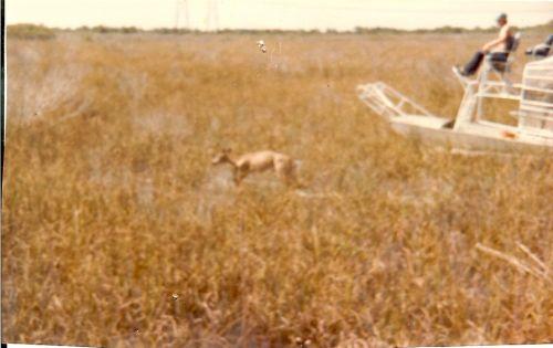 area 2 deer