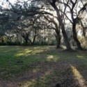 2.4 Lake Front Acres with Cabin, well and electric on Lochloosa Lake in North Central Florida.